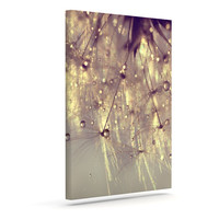 "Ingrid Beddoes ""Sparkles of Gold"" Outdoor Canvas Wall Art"