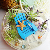 "Beachy Terrarium with Adirondack Chair -White & Sugar Starfish 10"" Glass Bowl Terrarium Kit w 4 Air Plants - Centerpiece - Gift"