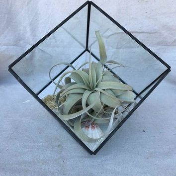 Geometric Airplant Terrarium with Xerographica