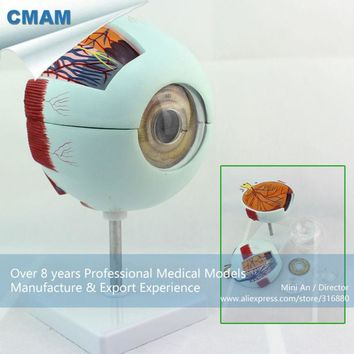 CMAM-EYE01 Enlarge 6x Life-size Plastic Human Eye Model Anatomy in 6-parts for School Education