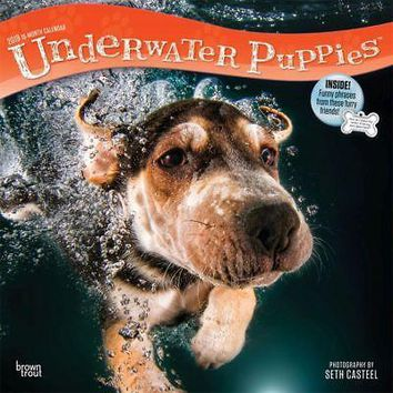 Underwater Puppies Wall Calendar, Funny Dogs by BrownTrout