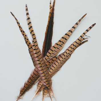 Pack of 10 - Real Ringneck Pheasant Feathers