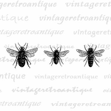 Bees Printable Image Graphic Collage Sheet Download Digital Vintage Clip Art Jpg Png Eps  HQ 300dpi No.3275