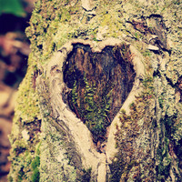 Forest Photography,  Heart Shaped Knot, Romantic Art,  Large Wall Art, Landscape Print, Rustic Cabin Decor, Nature Lover Gift,Glamping Decor
