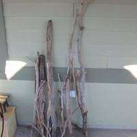 AMAZING DRIFTWOOD PIECES FROM THE JERSEY SHORE