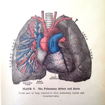 Vintage Heart Print  Pulmonary Artery and Aorta by CasaAndCo