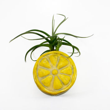 Lemon Magnetic Bud Vase | holds water, flower bud air plant succulent pencil pen holder | wall planter vase | yellow fruit | made to order