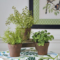 Potted Herbs - Set/3