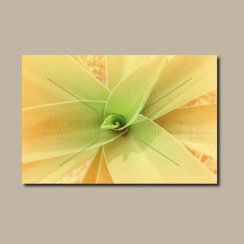 Agave Plant Rectangle Wall Art Orange Canvas. Agave Print Nature Canvas Art For Bathroom. Nature Photo Australian Sellers. Anthotype Process