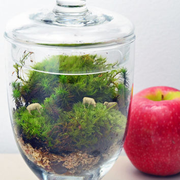 Sheep Terrarium // Live Moss // Apothecary Jar // Green Gift // Home Decor