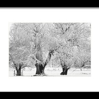 Three Trees In The Snow - Bw Fine Art Photography Print Framed Print