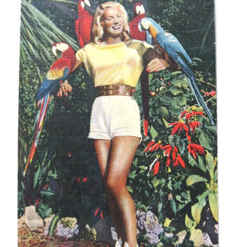 Vintage Postcard Parrot Jungle Red Road Florida Pin up Girl Colorful Birds Linen Ephemera