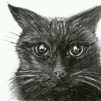 "Black Cat #1. 4x6"" original drawing black and white illustration Maine miniature"