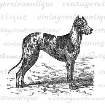 Digital Image Antique Dog Illustration Printable Dog Download Graphic Vintage Clip Art Jpg Png Eps  HQ 300dpi No.4283