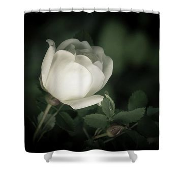 White Flower Of A Dogrose Shower Curtain