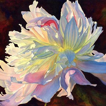White Peony, art watercolor painting print by Cathy Hillegas, June Light, 12x16