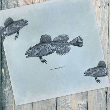 Vintage Fish Print 24x24 Vintage Beach Art Print Vintage Nautical Decor Ocean Wall Art - Giclee Print on Cotton Canvas and Satin Photo Paper