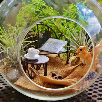 Squirrel on a leaf Terrarium  Kit~ Large Glass Terrarium ~ 2 Tillandsia Air Plants ~ Sand ~ Gift Idea ~ Birthday
