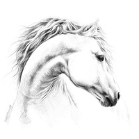 """Horse"" - Art Print by e Drawings38"