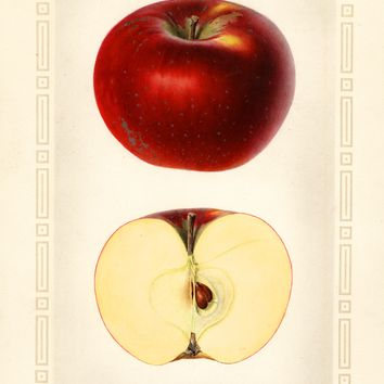 Apples, Paragon (1925)