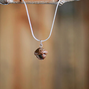 Real Acorn Necklace with Fossil Conch Shell + Sterling Silver handmade by Nuttier Than A Squirrel - red, rust, brown, cream, earthy, beach