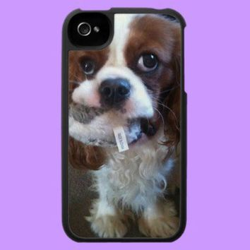 Zonda Puppy Blenheim Cavalier iPhone 4 Cases from Zazzle.com