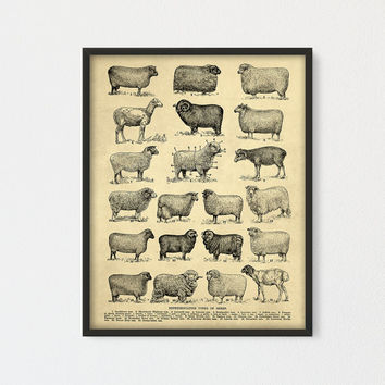 Breeds of Sheep Printable, Representative Types of Sheeps, Farmhouse decor, Rustic Poster sheep home decor, Cottage, Ranch Farming Gift Idea