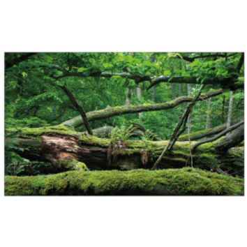 All living things forest terrarium cling from pet smart for Decoration habitat