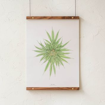 White Dawg Botanical Illustration Print