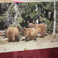 Yellowstone National Park Postcards lot of 4, Vintage Ephemera