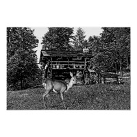 doe deer old cabin abstract nature art poster