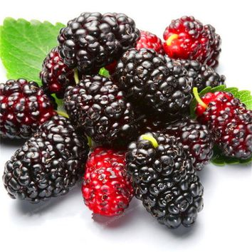 100 PCS Mulberry Seeds Miracle Fruit Seed Sweet Black Berry Giant Plants Tohum Rare Tree Bonsai Garden Bush Diy Home Garden