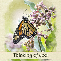 Thinking of You Monarch Butterfly Greeting Card Greeting Card