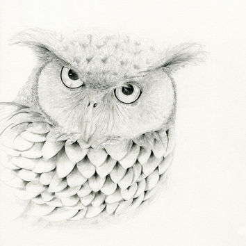 Mr. Owl Original Pencil Drawing Giclee Fine Art Print  of my original drawing woodland owl ohtteam