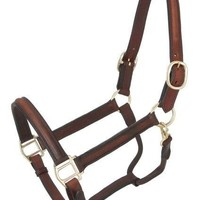 Raised and Padded Leather Halter - Leather Halters - Halters & Leads