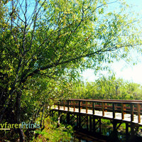 Bridge Nature Photography - Landscape Foliage Sunny Clear Skies Miccosukee reservation native american south florida trees wooden