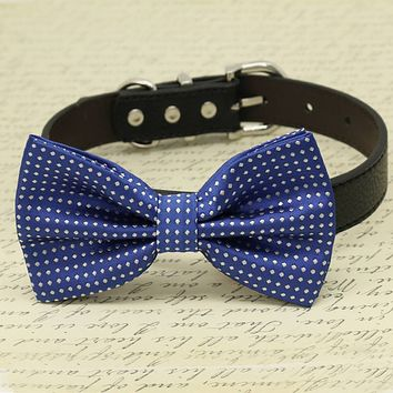 Royal Blue Dog Bow collar, Pet wedding accessory, Polka Dots, Something blue