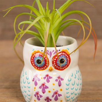 Owl Succulent By Natural Life