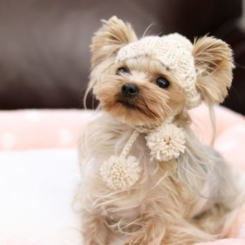 Handmade High End Cap Warm Knitted Kawaii Pets Store Warm Lovely Dog Hats for Small Pets Cats Maltese Yorkie Winter