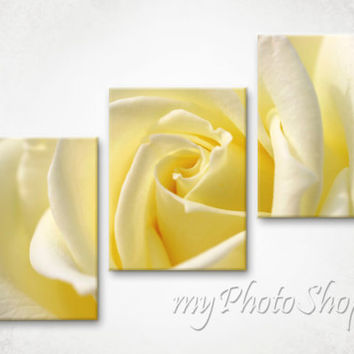 Framed  3 Panel Modern Nature Art Wall art Canvas print Photo Yellow Rose picture on Canvas