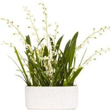 White Js Orchid In Oval Pot