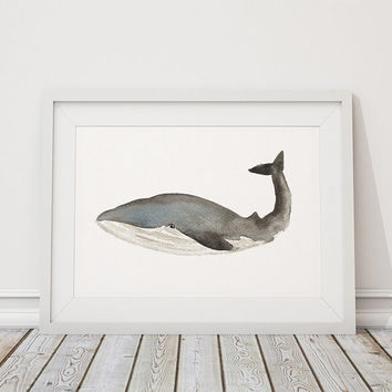 Whale poster Watercolor art Nursery print ACW20