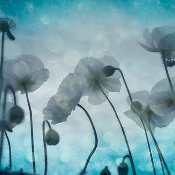 Nature photography, ACEO, photograph, art print, flower, floral, poppy, sky, booked, aqua