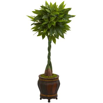 5' Money Artificial Tree in Decorative Planter (Real Touch)