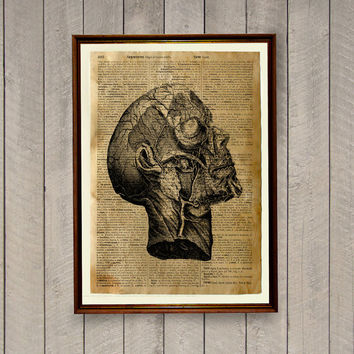 Vintage decor Head anatomy poster Medical illustration