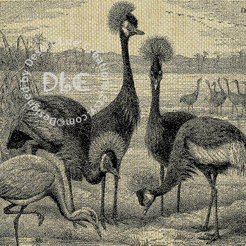 AFRICAN BIRDS dc232 - 8x10 inch Illustration Art for Transfers, Home Decor, Card Makers, Arts & Crafts