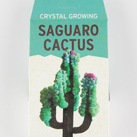 Saguaro Cactus Crystal Growing Kit Green One Size For Women 27561050001