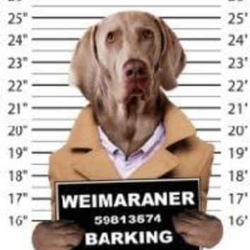 funny weimaraner barking t-shirt mens t-shirts dogs mugshot t-shirts mug shirt dog pets tshirt pet lover great gift