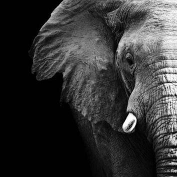 Black and White Elephant Canvas Art Print
