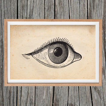 Vintage Eye Print Antique Poster Wall Art